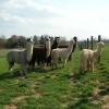 013-ken-den-alpaca