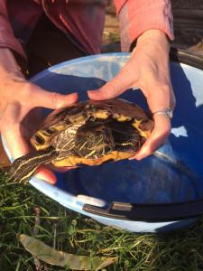 turtle christine macabee